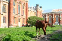 Russia hourse garden yard. Pustoshkinsky p-HN obl.n Pskov Russia Stock Images