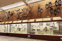 Paleontological Museum Stock Photo