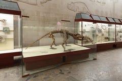 Herbivorous dinocephalia Royalty Free Stock Photography
