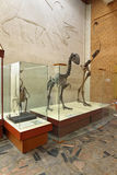 Gastornis and Moa Stock Photo