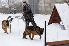 The man trains German shepherds, in winter. Russia Ivanovo Dec 24, 2017, the man trains German shepherds, in winter, editorial Royalty Free Stock Images