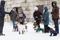 People train dogs in winter. Russia Ivanovo Dec 24, 2017, people train dogs in winter, editorial Stock Image