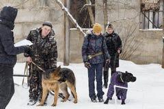 People train dogs in winter,. Russia Ivanovo Dec 24, 2017, people train dogs in winter, editorial Stock Image