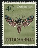 Butterfly Dafnis nerii. RUSSIA KALININGRAD, 12 NOVEMBER 2016: stamp printed by Yugoslavia, shows butterfly Dafnis nerii, circa 1964 stock image