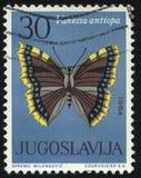 Butterfly Vanessa antiopa. RUSSIA KALININGRAD, 12 NOVEMBER 2016: stamp printed by Yugoslavia, shows butterfly Vanessa antiopa, circa 1964 royalty free stock photography