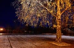 Russia. Petrozavodsk. Street Petrozavodsk at night. November 15, 2017. Russia. Karelia. Petrozavodsk. Street Petrozavodsk at night. A tree illuminated by the Royalty Free Stock Photos