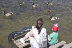 Russia, Krasnoyarsk, June 2019: people feed ducks in the pond.  royalty free stock photos