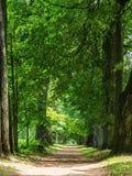 Ancient trees. Stock Photos