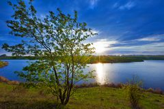 Green bush on the background of a lake and a bright sunset. royalty free stock photo