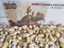 Russia, maize producing country, dry corn grains and russian banknote of 100 rubles. Yellow edible seed, agriculture and harvest, world cereal production stock photos