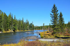 Russia, mountain Altai, river Multa flows from the lower Multinskoe lake Stock Images