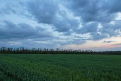 The movement of the thunderclouds over the fields of winter whea. Russia. The movement of the thunderclouds over the fields of winter wheat in early spring in Royalty Free Stock Image