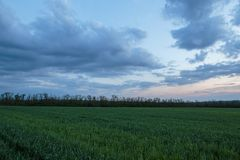 The movement of the thunderclouds over the fields of winter whea. Russia. The movement of the thunderclouds over the fields of winter wheat in early spring in Royalty Free Stock Photography
