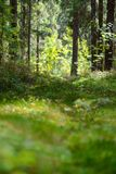 Russia. Natural green forest landscape. Royalty Free Stock Photography