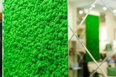 Russia, Novosibirsk - August 30, 2018: decorative moss for interior decoration. office style, interior design