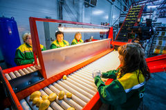 Russia, Omsk - September 26, 2014: vegetable factory Stock Photography