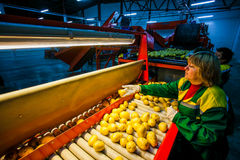 Russia, Omsk - September 26, 2014: vegetable factory Royalty Free Stock Image