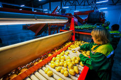 Russia, Omsk - September 26, 2014: vegetable factory Stock Image