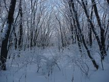 Russia. Snowy winter forest in the Stavropol `Taman Forest Dacha` royalty free stock photography