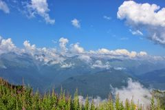 Blue caucasus. Russia, Sochi. Caucasus. Marble clouds. Lilac flowers. Landscape. Mountains. Summer. Golden sun royalty free stock photo