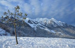 Sochi, ski resort Rosa Khutor. Morning winter landscape with single tree in the foreground in the vicinity of the Olympic. Russia, Sochi, ski resort Rosa Khutor Stock Photos
