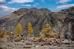 Colorful rocks and Golden autumn Royalty Free Stock Photo