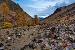 Colorful rocks and Golden autumn Stock Image