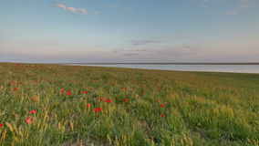 Russia, timelapse. The movement of clouds over the fields of winter wheat in early spring in the vast steppes of the Don. Russia, Rostov region, timelapse. The stock video footage