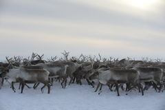 Russian Arctic Aboriginal ! Royalty Free Stock Image