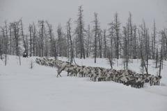 Russian Arctic Aboriginal Royalty Free Stock Image