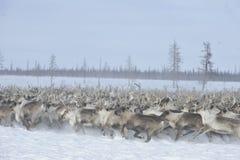 Russian Arctic Aboriginal Royalty Free Stock Images