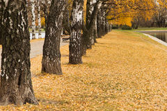 Russian autumn Stock Images