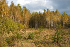Russian autumn forest Royalty Free Stock Photography