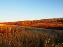Russian autumn landscape Royalty Free Stock Image