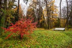 Russian autumn landscape. Paths in the Oranienbaum Park. Saint-Petersburg. Autumn 2016. Royalty Free Stock Photo