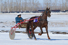Russian bay trotter Stock Images