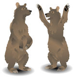 Russian bear Stock Images