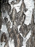 Russian birch bark. Small details Royalty Free Stock Images