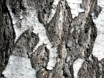 Russian birch bark Stock Photos