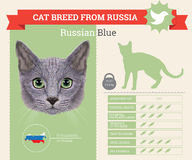 Russian Blue Cat breed infographics vector illustration