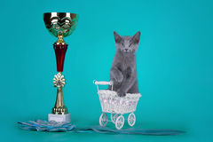 Russian blue cat and her cup champion Royalty Free Stock Photography