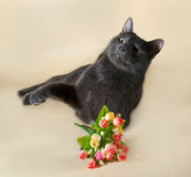 Russian blue cat lying with bouquet of flowers on gray Royalty Free Stock Photography