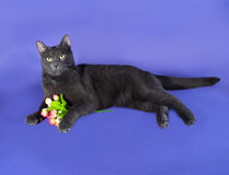 Russian blue cat lying next to bouquet of flowers on lilac Royalty Free Stock Image