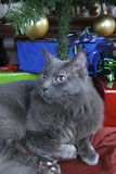 Russian blue Christmas Royalty Free Stock Photos