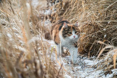 Lovely cat. I walked to river and this cat came to play with me Stock Photography