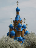Russian church and cherry-trees in blossom Stock Images