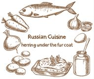 Russian cuisine. Herring under a fur coat, ingredients, vector s. Ketch drawing Royalty Free Stock Photos
