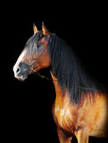 Russian draft horse Royalty Free Stock Photos