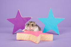Russian dwarf hamster on a purple background Stock Photo