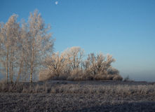 Russian early frosts Royalty Free Stock Photo